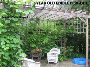 Edible Pergola