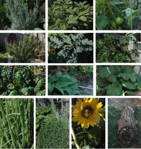 Greg's Garden Photo Compilation